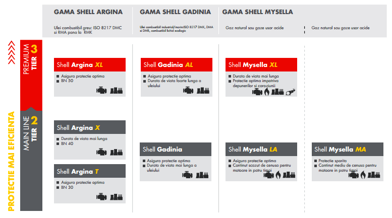 shell argina shell gadina shell mysella