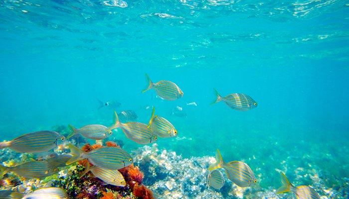 Tarile sustenabile si pasii lor in sensul protejarii oceanelor