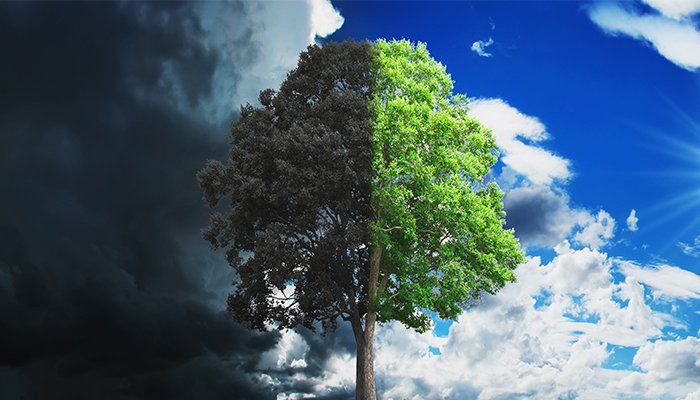 Cum ar putea arata 2030 daca invingem schimbarea climatica