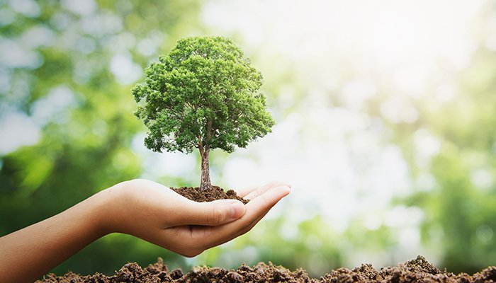 Dreptul omului la un mediu sanatos protejeaza natura