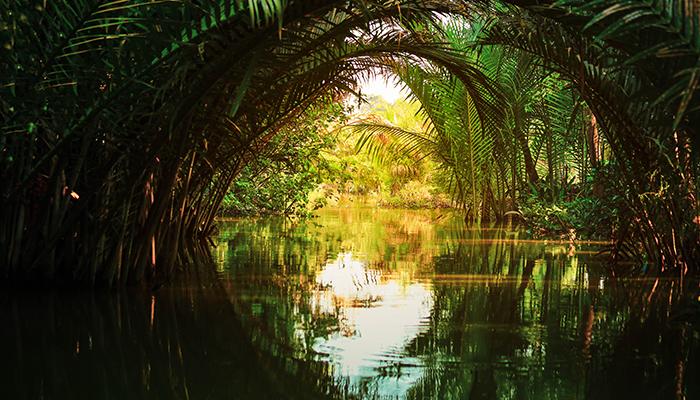 Padurile tropicale isi pierd capacitatea de a absorbi carbonul