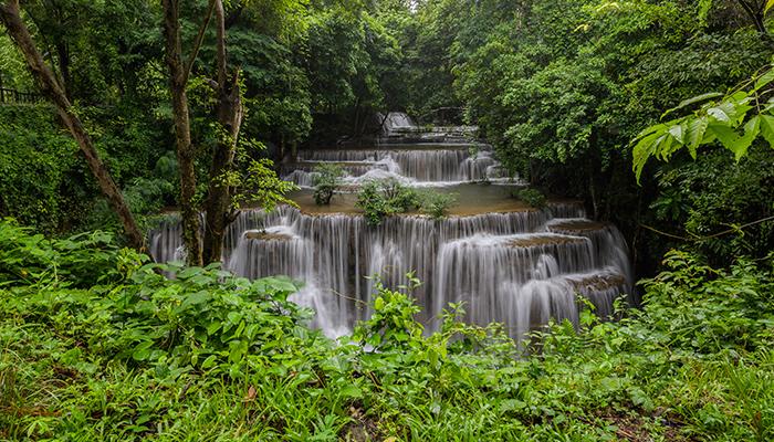 Schimbarea climatica ar putea compromite rezervoarele de carbon reprezentate de padurile tropicale
