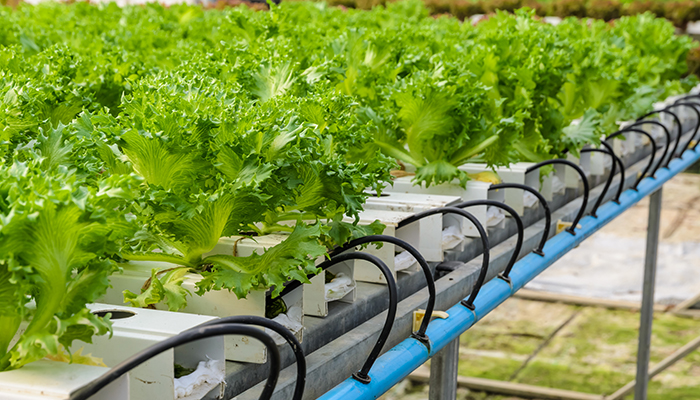 Sistemele acuaponice: o solutie pentru auto-sustenabilitate