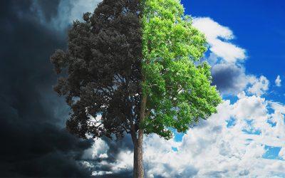 Rezistenta la schimbarile climatice este noua sustenabilitate