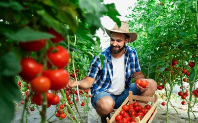O agricultura sustenabila