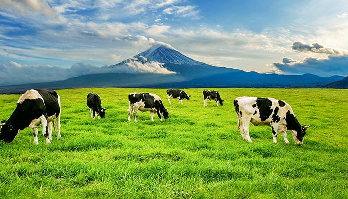 Productia de carne organica este la fel de daunatoare pentru mediu