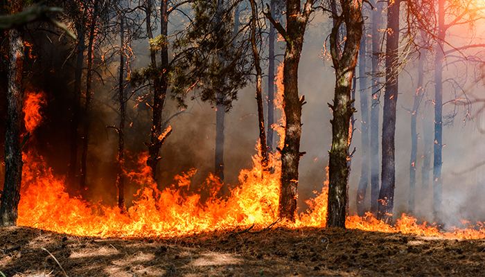Fumul de la incendiile de vegetatie este mai toxic decat alte forme de poluare a aerului