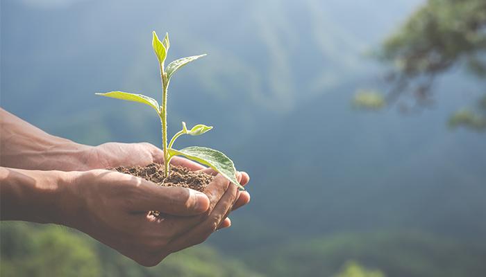 Sustenabilitatea explicata simplu: ponturi de sustenabilitate in gradini si case