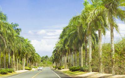 Copacii pot deveni cei mai mari responsabili de poluarea aerului in LA